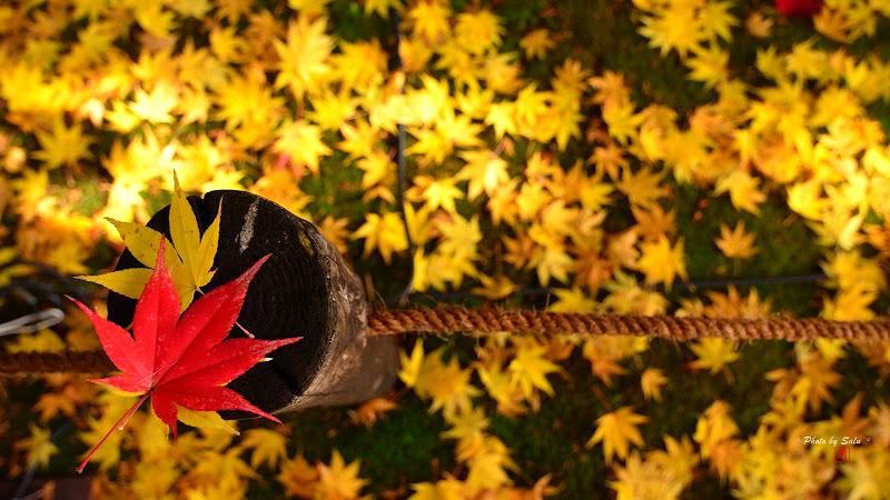 日本京都小旅行-鹿王院