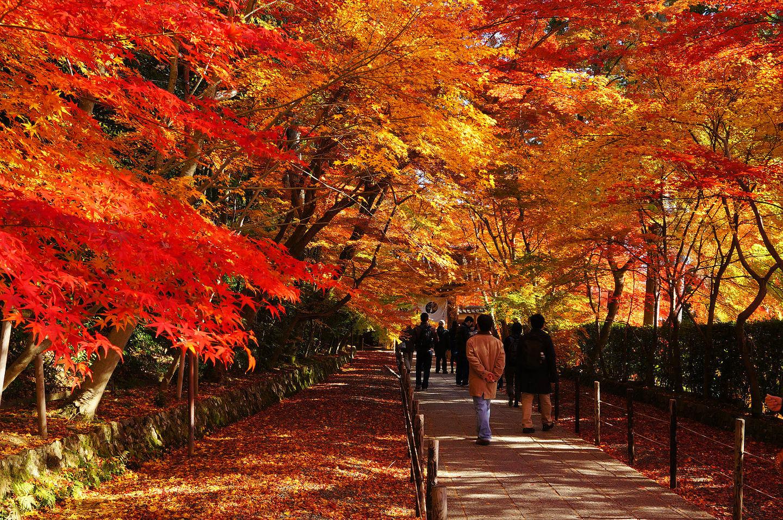 秋天必訪的日本絕景,東北6縣紅葉泡湯嚴選(上)