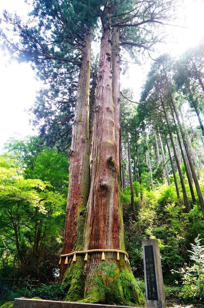 日本關東最強能量景點!一起去茨城縣日立市御岩神社吸收滿滿元氣!