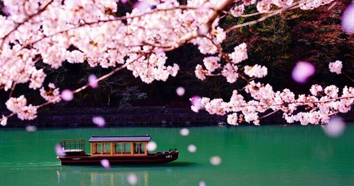 2019櫻花季|京都最佳賞櫻景點